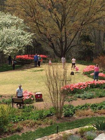 Cheekwood Botanical Gardens & Museum of Art: Tulips blooming
