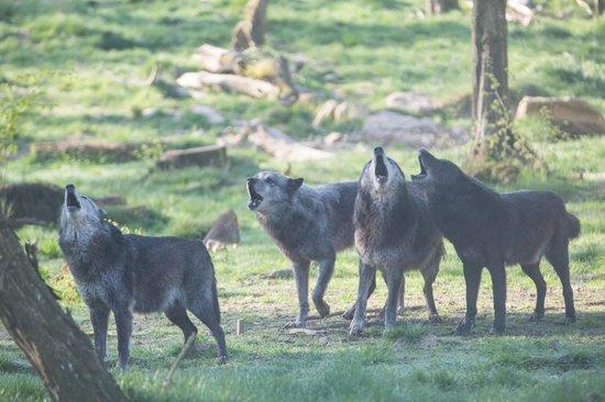 Parc Animalier de Sainte-Croix - Hébergements : Nos voisins