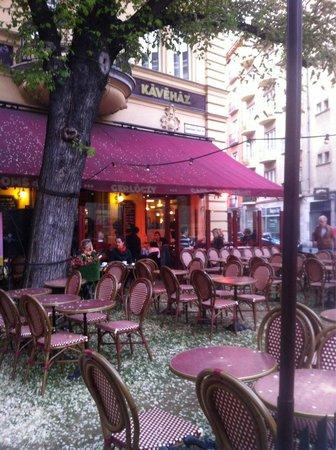 Gerloczy Kavehaz Cafe and Restaurant : molto carino, si mangia bene.. Ma pagate in contanti precisi o con carta.. Non danno resto.. Ma