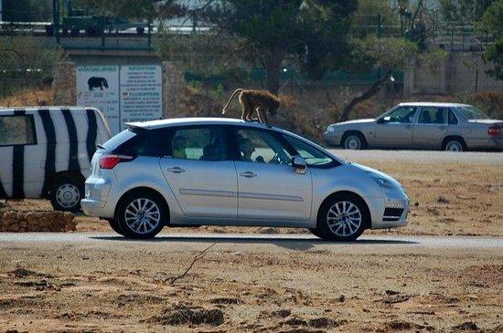 Safari Zoo: Verkratzte (Miet-)Autos?