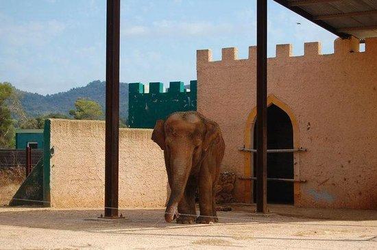 Safari Zoo: Seltsam schwankender Elefant