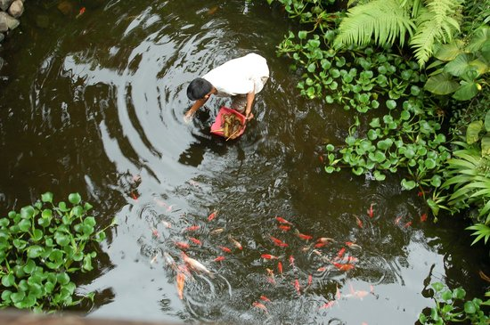 Sri Ratih Cottages : The gardener cleaning the pond