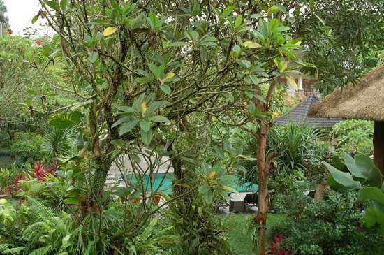 Sri Ratih Cottages : Garden