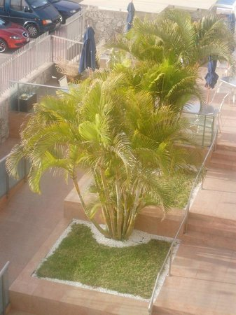 Morasol Suites : Trees in hotel grounds