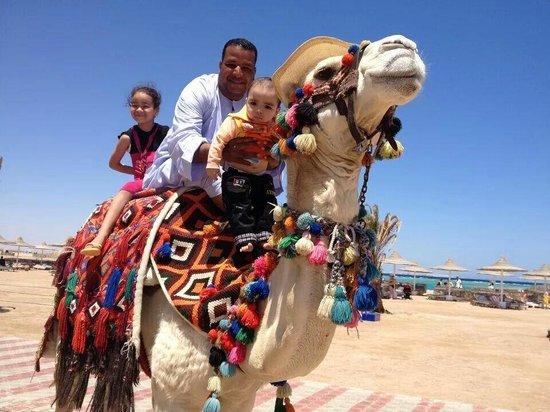 Coral Beach Resort: So friendly camel (max)