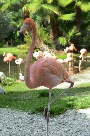 Our granddaughter loved the jungle gardens sarasota - Marie selby botanical gardens coupon ...