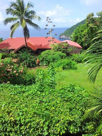 Picture of jardin botanique de deshaies deshaies for Jardin 5 sens guadeloupe