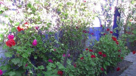 La Casa de Melgar Hostal: Geraniums galore