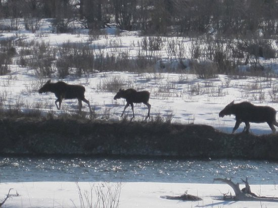 Moose seen while with Hole Hiking Experience