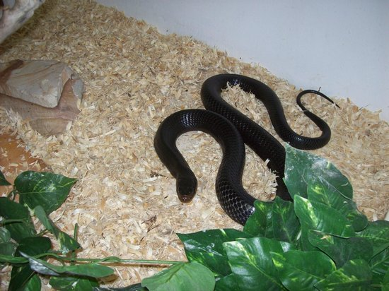 Sarasota Jungle Gardens : Reptile House
