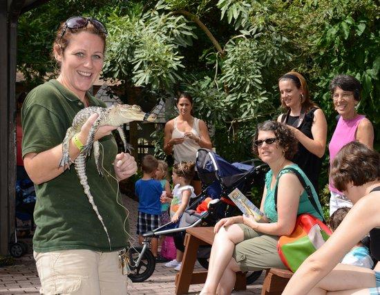 Sarasota Jungle Gardens : Reptile Encounter Show