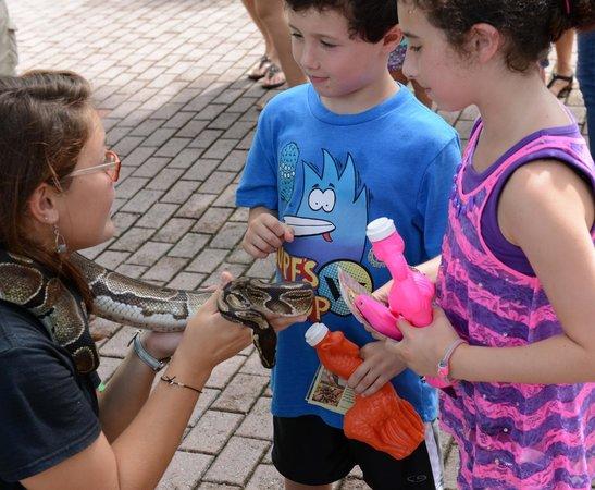 Sarasota Jungle Gardens : Up close with animals
