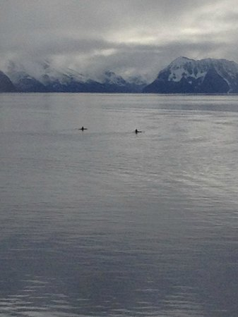 Kenai Fjords Tours: View from Sea Life Center Deck - 2 kayakers paddling in Resurrection Bay.