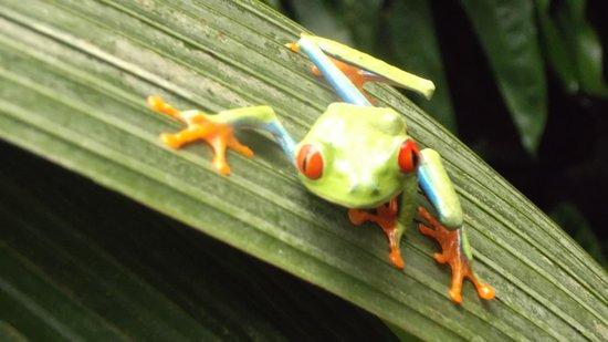 La Paz Waterfall Gardens: In the frog exhibit