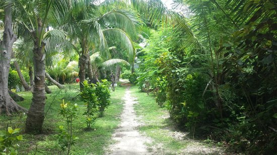 Bounty Island Resort: Walking to breakfast