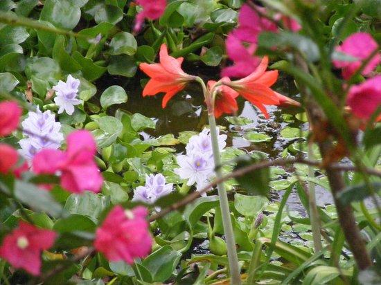 Establo San Rafael: Garden pond