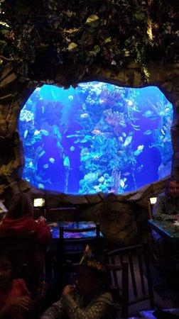 One of Rainforest Cafe's signature aquarium tanks