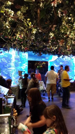 Rainforest Cafe: Guests entering the rainforest just past the main entrance