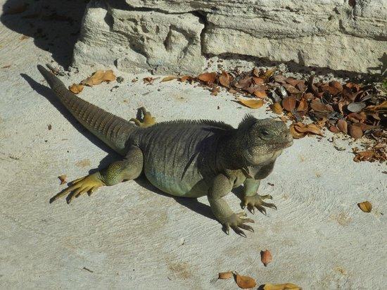 The Meridian Club Turks & Caicos : So darn cute!