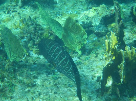 The Meridian Club Turks & Caicos: Always ellusive grouper