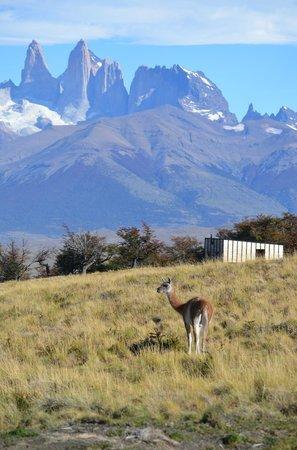 Awasi Patagonia - Relais & Chateaux: De camino a la cabaña