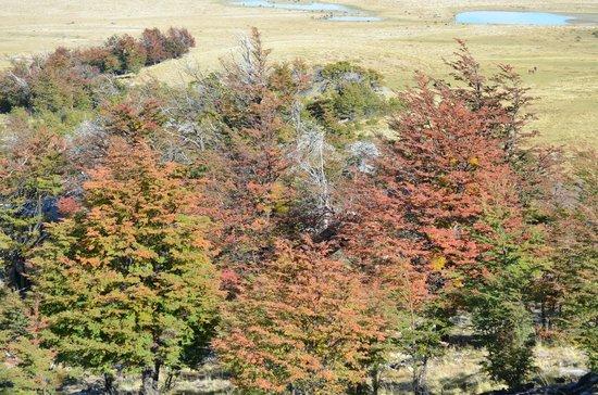 Awasi Patagonia - Relais & Chateaux: El bosque en otoño se pone precioso.