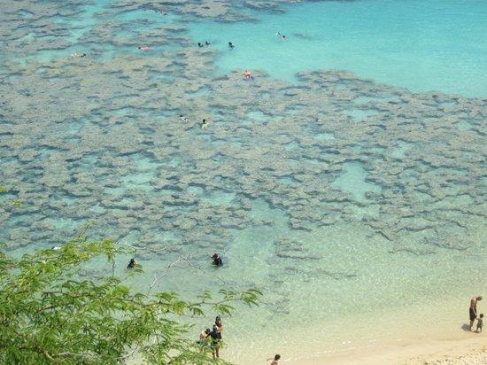 Hanauma Bay Nature Preserve: Hanauma Bay coral