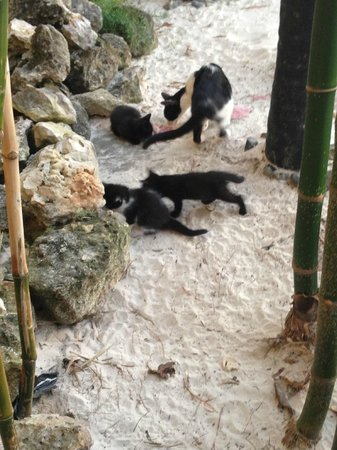 Hotel Playa Coco : cats out side of the japanese resturant