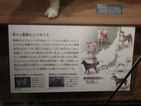 National Museum of Nature and Science: Hachiko