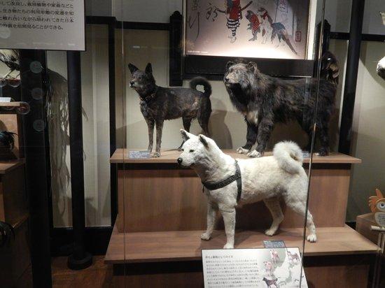 Museo Nacional de Ciencia: Hachiko