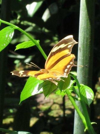 Gaia Hotel & Reserve : Butterfly Garden Excursion