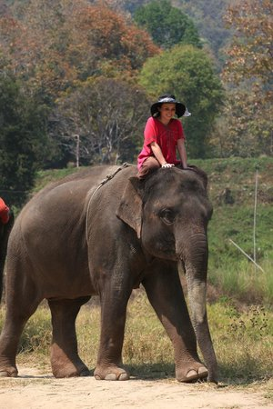 Patara Elephant Farm - Private Tours : Patara Elephant Farm