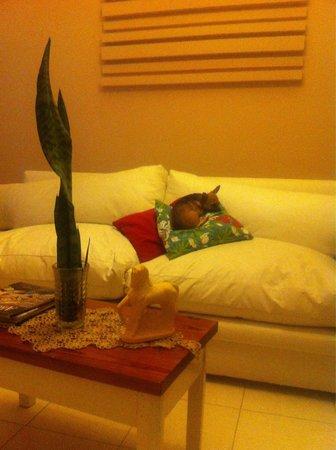 Las Rosas, الأرجنتين: Olguita la Chihuahua del hotel