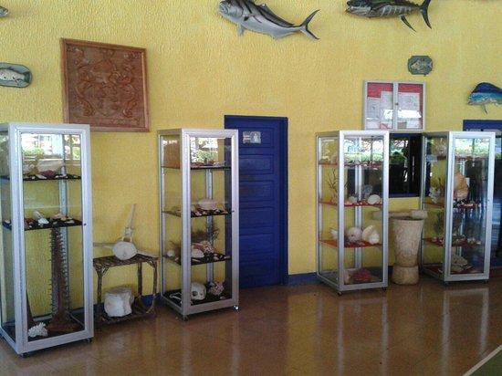 Hotel y Restaurante Samoa del Sur: Coleccion de conchas marinas