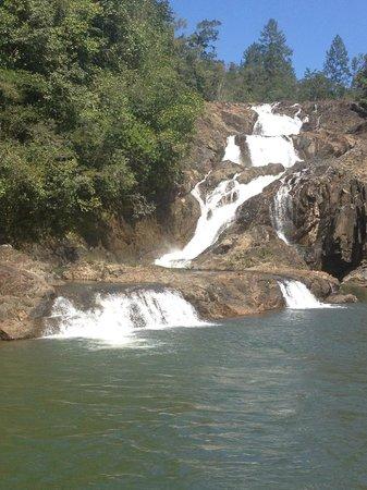 Mystic River Resort : Sapodilla