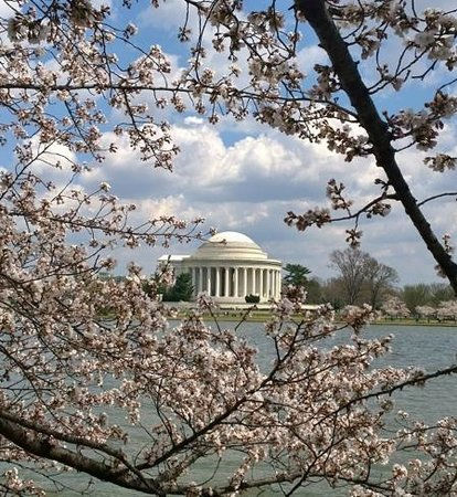 DC by Foot : Jefferson Memorial through the cherry blossoms