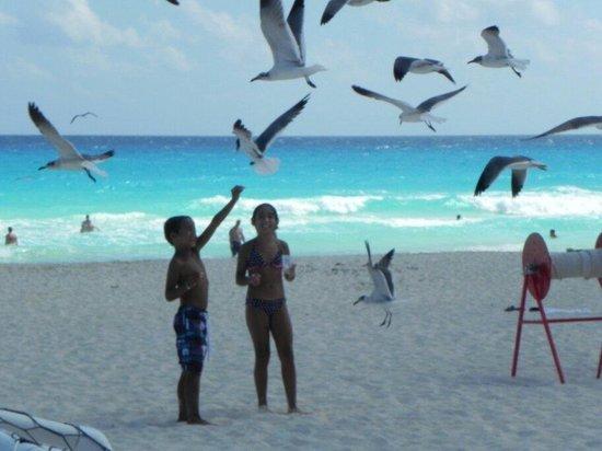 Sunset Royal Beach Resort: Alimentando a las gaviotas