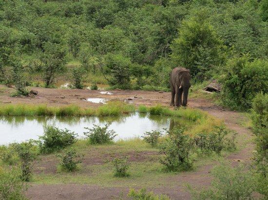 Victoria Falls Safari Lodge: The water hole