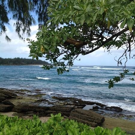 Turtle Bay Resort : very beautiful view from the cottage 110