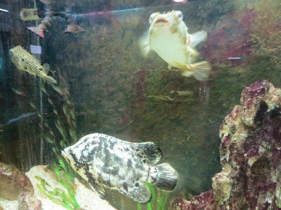 Aquarium At Rockport Harbor Rockport Tx Picture Of