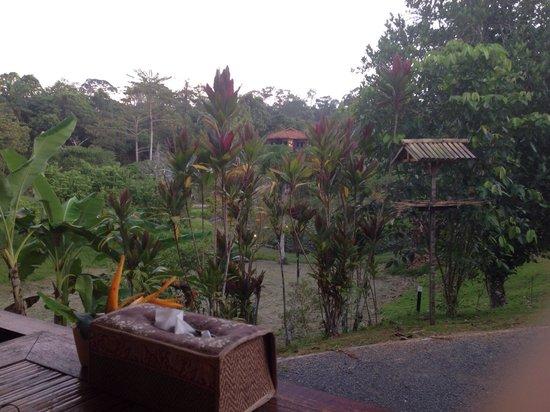 Sepilok Forest Edge Resort: Nest restaurant surrounding grounds