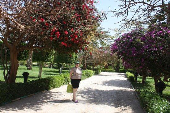 Golden 5 Paradise Resort: Цветущий сад отеля.
