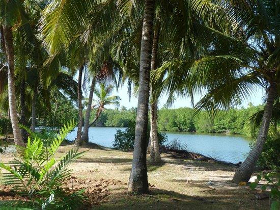 Coconut Island Cabanas and Restaurant : Blick auf Lagune