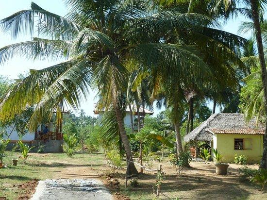 Coconut Island Cabanas and Restaurant: Blick auf Gelaende