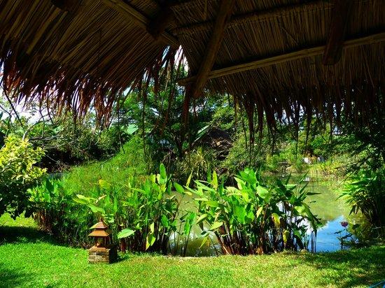 Secret Garden Chiang Mai: Hotelanlage