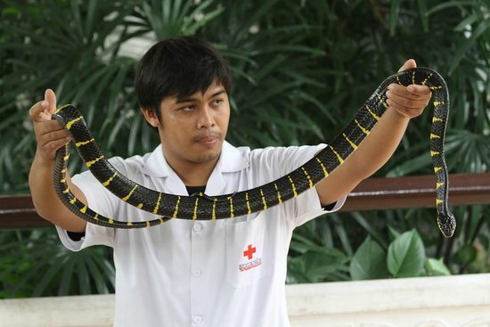 Snake Farm (Queen Saovabha Memorial Institute): One of the venomous snakes