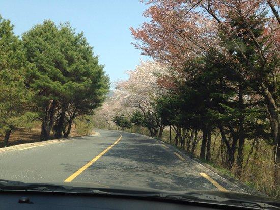 Seokguram: Road