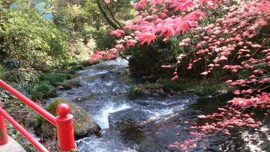 Shirakawa Springs: 春なのに紅葉