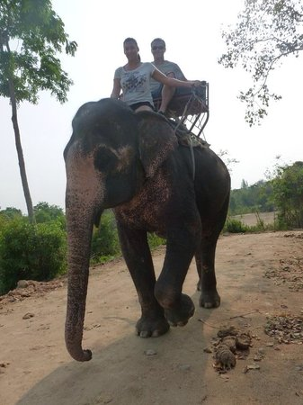 Elephant Village : Great fun, well cared for, voice control