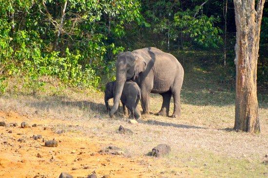 Hotel Treetop: Inside Park - Group of Elephants
